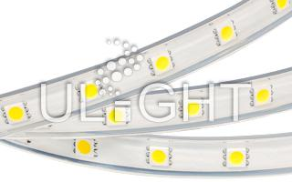 Лента ARL-W5060PG-50-220V Cool 9000K (500 LED, 10m)
