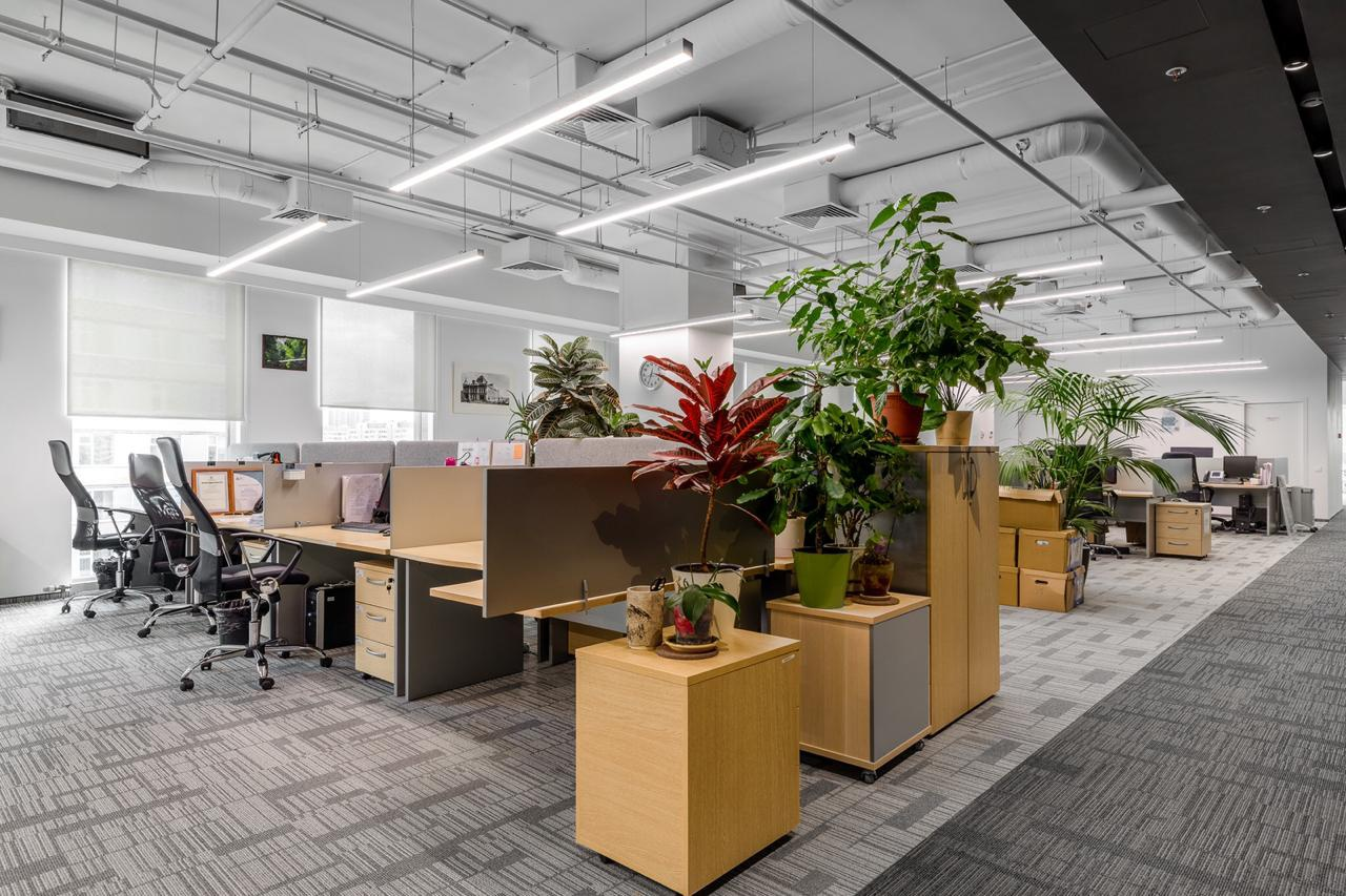 картинки для рабочего офис зеленой отражение перевернутое